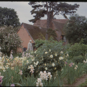 Irises at Benton End' July, 1963